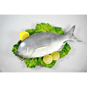 Fish - Gray Snapper